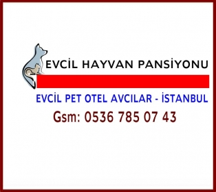 İ.No:521   EVCİL PET OTELİ